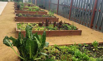 Valley View Community Garden