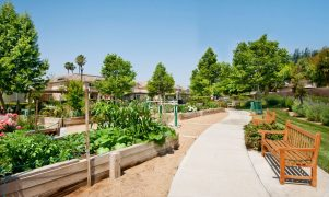 Affordable Housing community garden